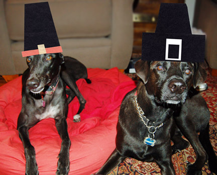 Dogs in pilgrim hats